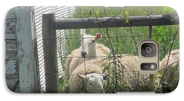 Galaxy Case featuring the photograph Sheep Resting by Tina M Wenger