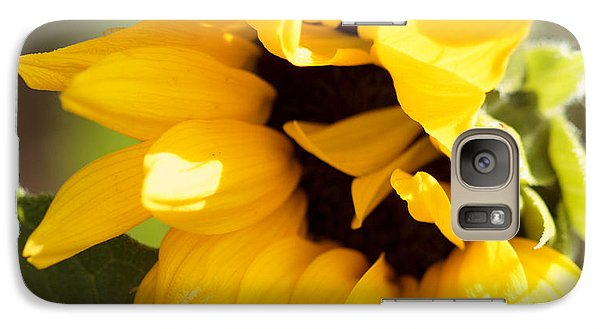 Galaxy Case featuring the photograph Shy Sunflower by Cathy Donohoue