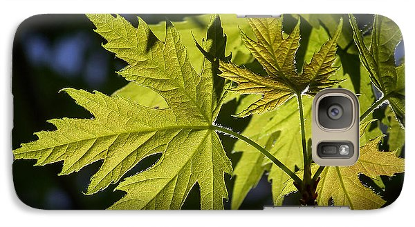 Galaxy Case featuring the photograph Silver Maple by Ernie Echols