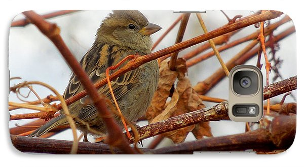 Galaxy Case featuring the photograph Single Sparrow Standing by Heidi Manly