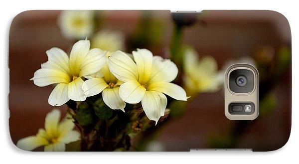 Sisyrinchium Striatum Galaxy S7 Case