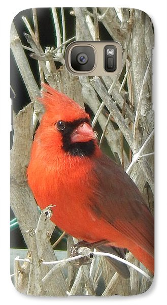 Galaxy Case featuring the photograph Sitting Pretty by Betty-Anne McDonald