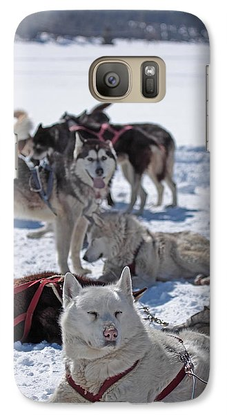 Galaxy Case featuring the photograph Sled Dogs by Duncan Selby