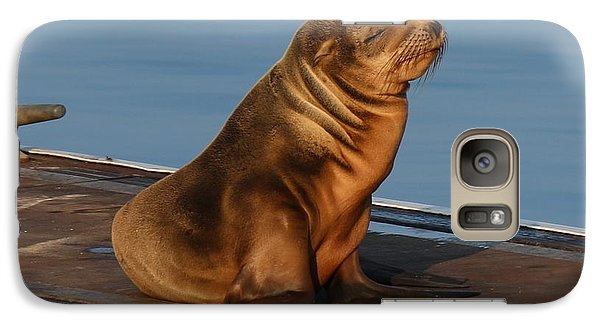 Galaxy Case featuring the photograph Sleeping Wild Sea Lion Pup  by Christy Pooschke