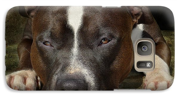 Bull Galaxy S7 Case - Sleepy Pit Bull by Larry Marshall