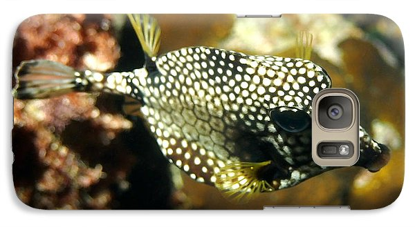 Galaxy Case featuring the photograph Smooth Trunkfish by Amy McDaniel
