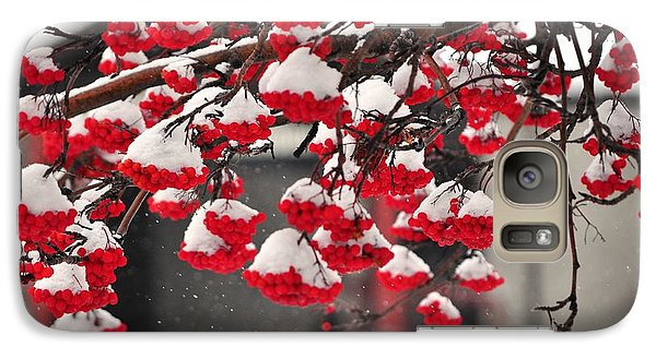 Galaxy Case featuring the photograph Snowy Mountain Ash Berries by Fran Riley