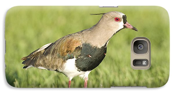 Lapwing Galaxy S7 Case - Southern Lapwing by William H. Mullins