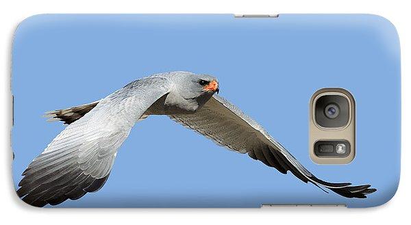 Hawk Galaxy S7 Case - Southern Pale Chanting Goshawk In Flight by Johan Swanepoel