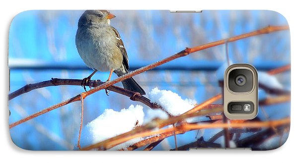 Galaxy Case featuring the photograph Sparrow On Grapevine by Heidi Manly
