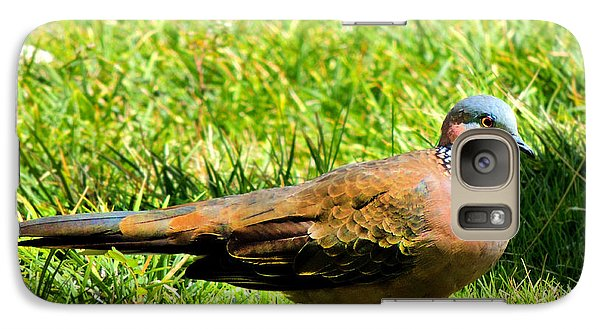 Galaxy Case featuring the photograph Spotted Nape Dove by Kristine Merc