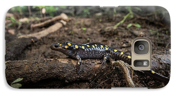 Salamanders Galaxy S7 Case - Spotted Salamander (ambystoma Maculatum by Pete Oxford