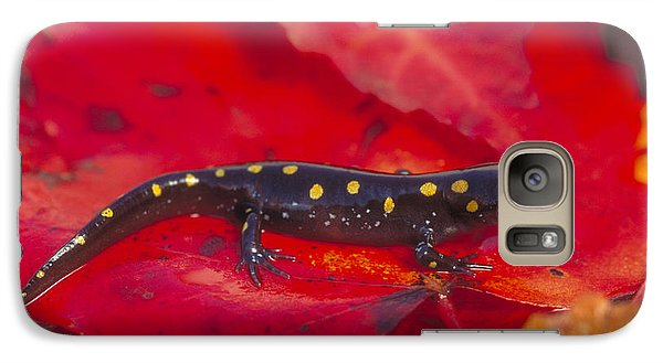 Spotted Salamander Galaxy S7 Case by Paul J. Fusco