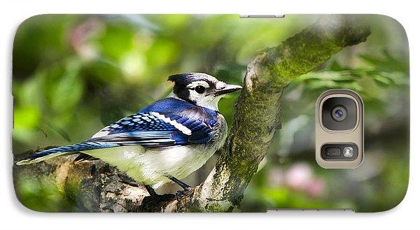Spring Blue Jay Galaxy S7 Case