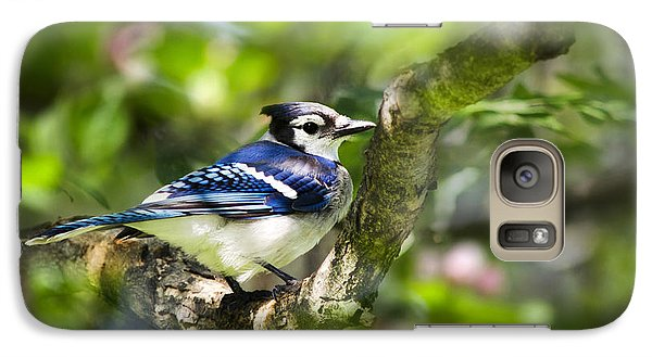 Spring Blue Jay Galaxy S7 Case by Christina Rollo