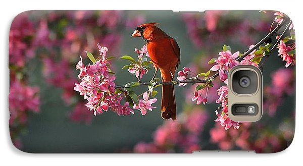Galaxy Case featuring the photograph Spring Morning Cardinal by Nava Thompson