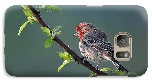 Galaxy Case featuring the photograph Song Bird In Spring by Nava Thompson