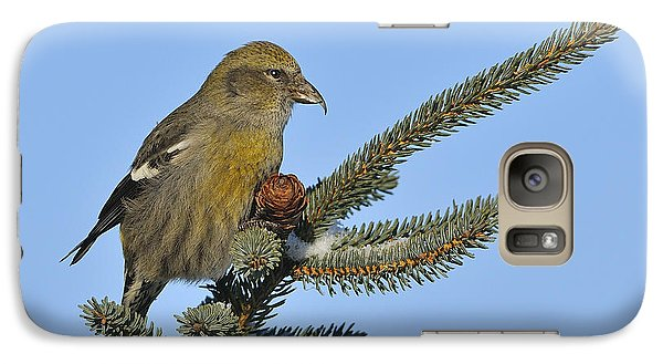 Spruce Cone Feeder Galaxy S7 Case by Tony Beck