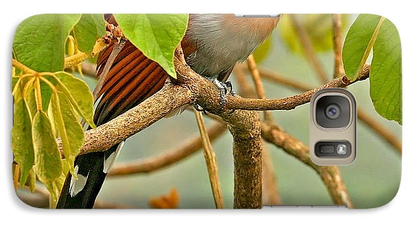 Galaxy Case featuring the photograph Squirrel Cuckoo In Costa Rica by Peggy Collins