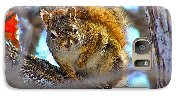 Galaxy Case featuring the photograph Squirrel Duty. by Johanna Bruwer