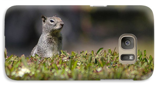 Galaxy Case featuring the photograph Spy Squirrel  by Richard Stephen