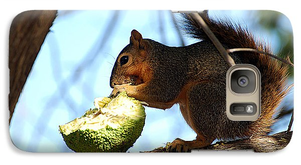 Galaxy Case featuring the photograph Squirrel's Delicacy by Linda Cox