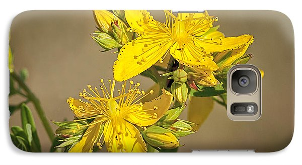 Galaxy Case featuring the photograph St Johns Wort by Betty Depee