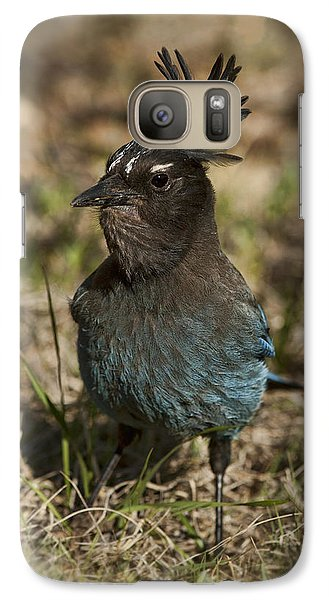 Galaxy Case featuring the photograph Stellar's Jay - Inland Race by Gregory Scott
