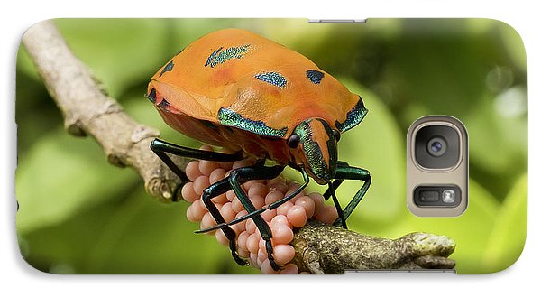 Galaxy Case featuring the photograph Stink Bug Eggs 00001 by Kevin Chippindall