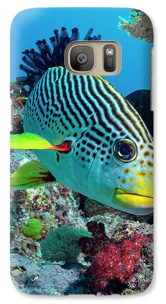 Striped Sweetlips On A Reef Galaxy Case by Louise Murray