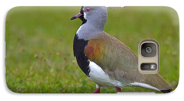 Strutting Lapwing Galaxy Case by Tony Beck