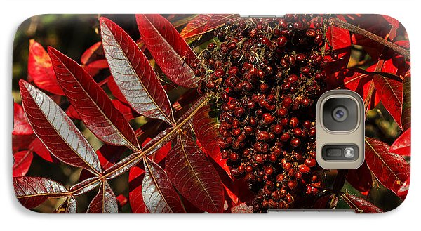 Galaxy Case featuring the photograph Sumac At Prime Hook by Robert Pilkington