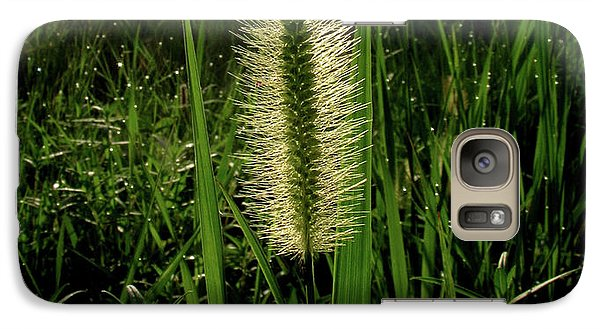 Galaxy Case featuring the photograph Sun-lite Grass Seed by Donna Brown