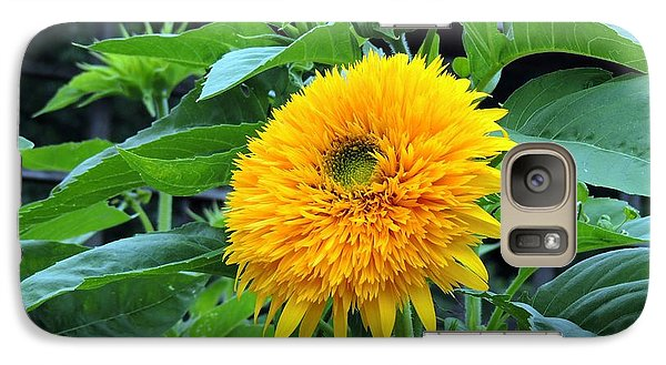 Galaxy Case featuring the photograph Sunflower Drama by Teresa Schomig