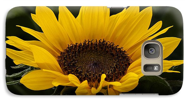 Galaxy Case featuring the photograph Sunflower by Inge Riis McDonald