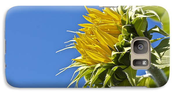 Galaxy Case featuring the photograph Sunflower by Linda Bianic