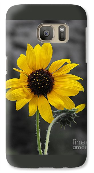 Galaxy Case featuring the photograph Sunflower On Gray by Rebecca Margraf