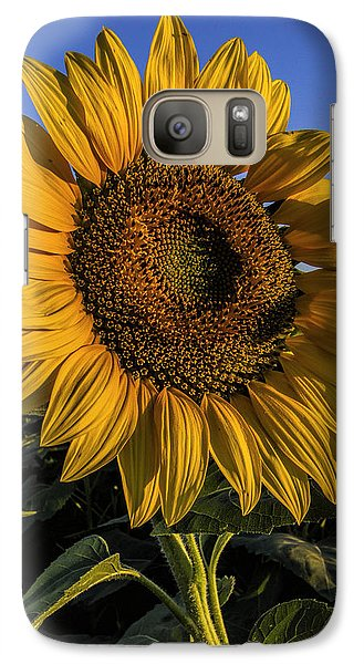Galaxy Case featuring the photograph Sunflower by Rob Graham
