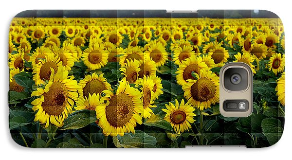 Galaxy Case featuring the photograph Sunflower Squared by Kathy Churchman