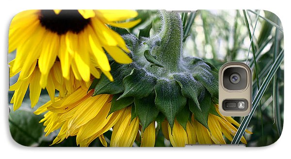 Galaxy Case featuring the photograph Sunflowers by Denise Pohl