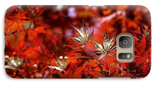 Galaxy Case featuring the photograph Sunlit Japanese Maple by Rona Black