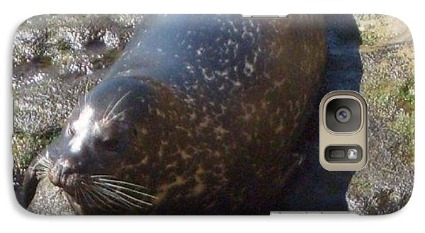 Galaxy Case featuring the photograph Sunning Seal by Philomena Zito