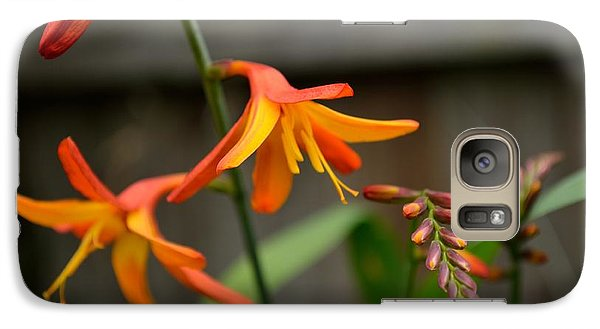 Galaxy Case featuring the photograph Sunny Crocosmia by Scott Lyons