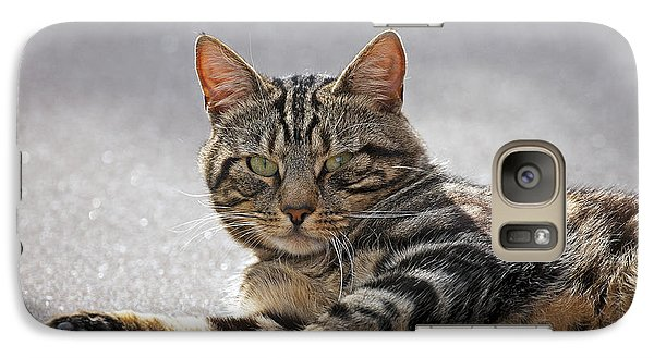 Galaxy Case featuring the photograph Tabby Cat by Paul Scoullar