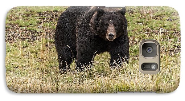 Galaxy Case featuring the photograph The Big Black Grizzly Boar by Yeates Photography