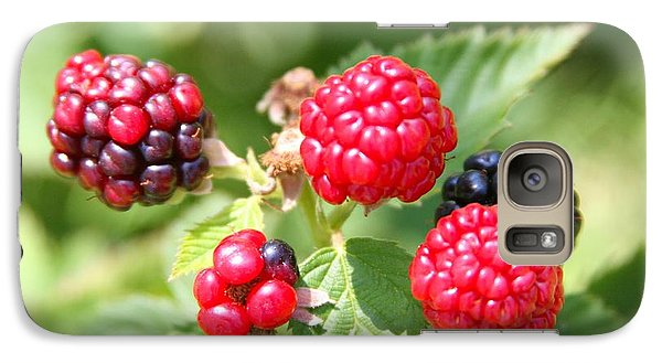 Galaxy Case featuring the photograph The Blackberries Are Coming-the Blackberries Are Coming by Margaret Newcomb