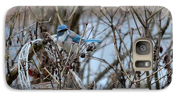 Galaxy Case featuring the photograph The Gathering Blue Jay by Marjorie Imbeau