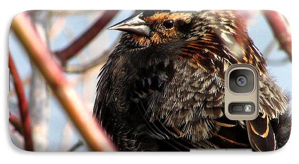 Galaxy Case featuring the photograph The Lady Blackbird by Kimberly Mackowski