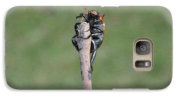 Galaxy Case featuring the photograph The Posing Beetle by Verana Stark