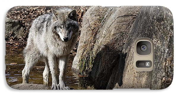 Galaxy Case featuring the photograph Timber Wolf In Pond by Wolves Only